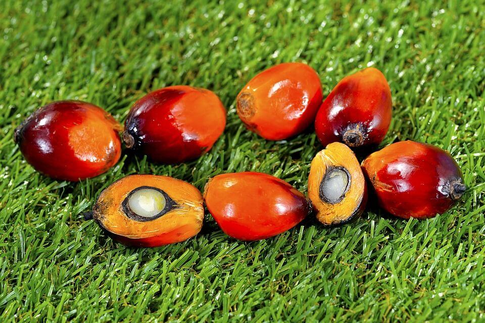 Шкода пальмової олії: міф чи реальність?