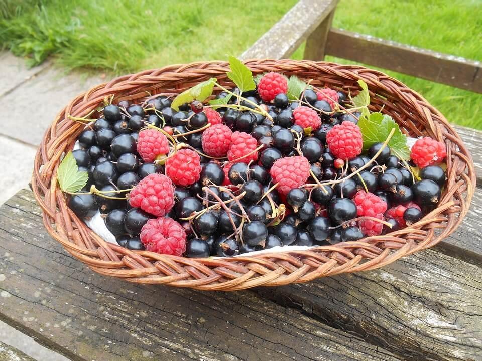 Які ягоди дуже корисні для здоровя та схуднення?